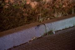 Das Motorrad raste über den Bordstein durch eine Hecke.|Foto: DLB